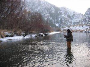 weber_river_whitefish_paul_thompson